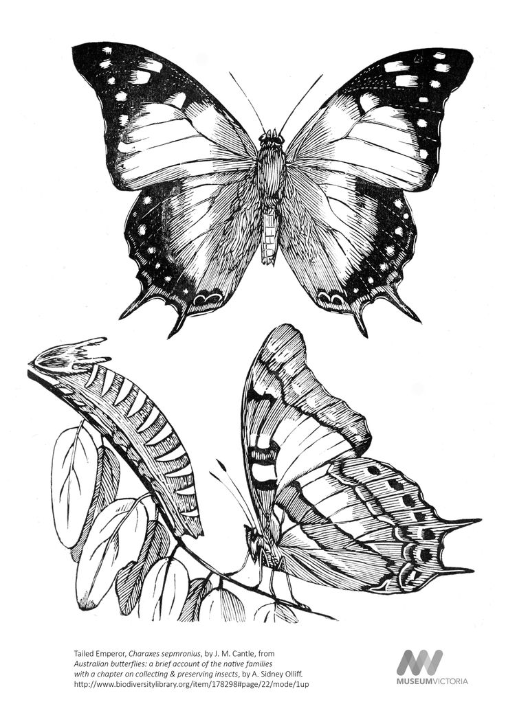 """To download this image, right click on the image and choose """"save image as"""" to save the image to your computer. You can then print and colour at your leisure!"""