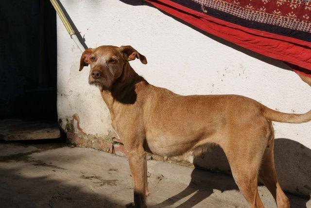 PZ - Adopção de Cadela - Cão Rafeiro - Xiva - 15 anos - acolhido(a) por União Zoófila