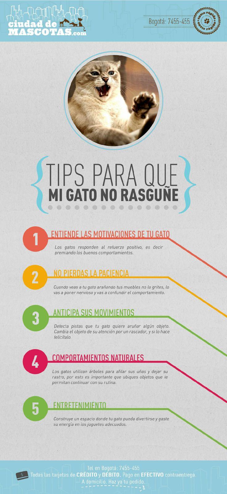 Tus gatos rasguñan porque necesitan marcar y dejar su rastro. Es muy importante que enriquezcas su entorno.