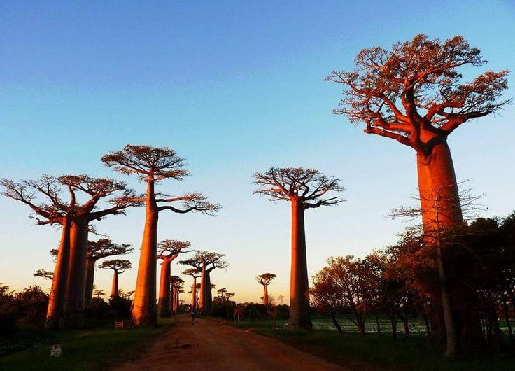 English speaking local tour company in madagascar that provides all transport and package trip to suit your time and your budget. http://www.faniry-madagascar-tours.ovh #madagascartour #travelmadagascar #madagascarguide #holidaysmadagascar