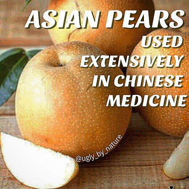 Health Benefits of Asian Pears Asian pears have a yellow speckled outside and a juicy crisp white center. The consistency and texture similar to an apple. They are at their best when they ripen on the tree. Best served ice cold & raw. Asian pears are priced higher than apples but are definitely worth the added cost. Considered cold in nature pears are used by traditional Chinese medicine to detoxify regenerate body fluids dissolve mucus quench thirst relieve restlessness promote urination…