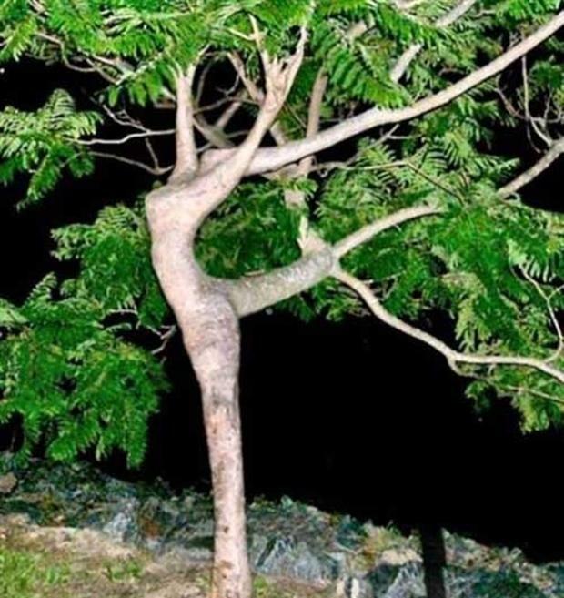 Árvore tem formas parecidas às de uma bailarina (Foto: Reprodução/ Carol Lynn Fraser)