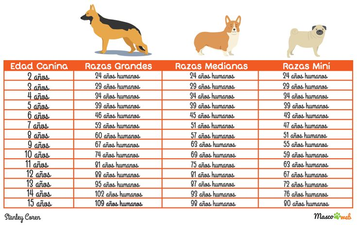 Resultado de imagen para tabla edad perros