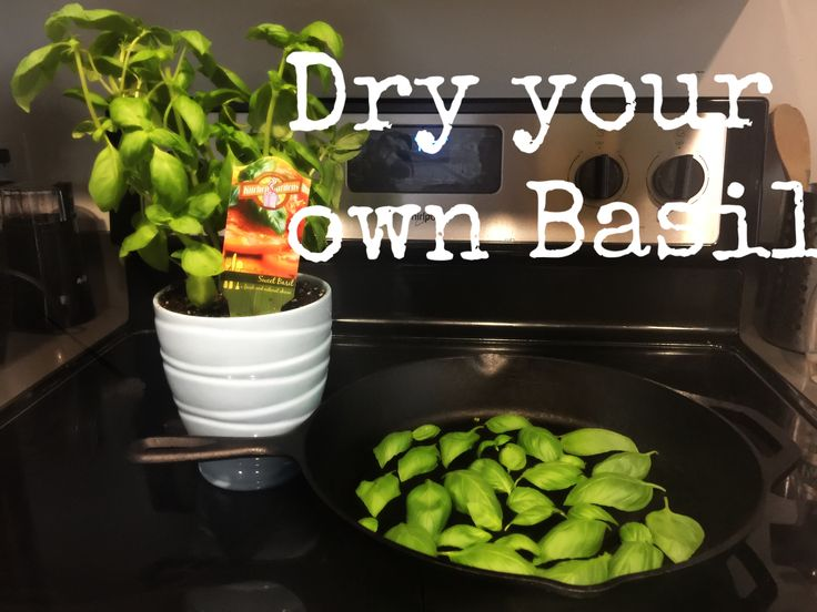 Dry your own herbs! How to dry Basil.