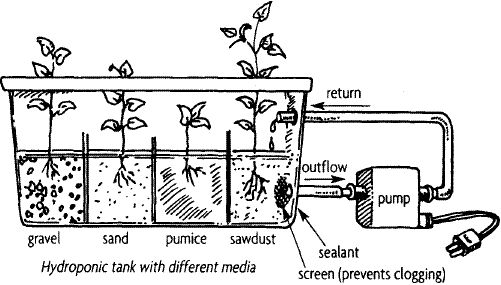 1000  images about aquaponics on pinterest