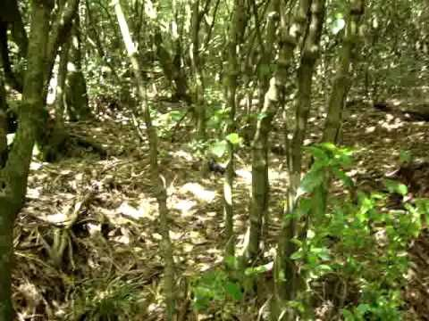New Zealand native bird sounds