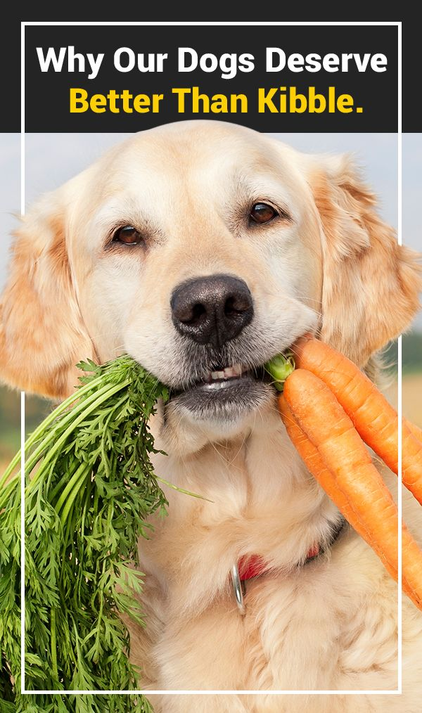How The Right Food Can Help Your Dog Live A Better Life Dogs
