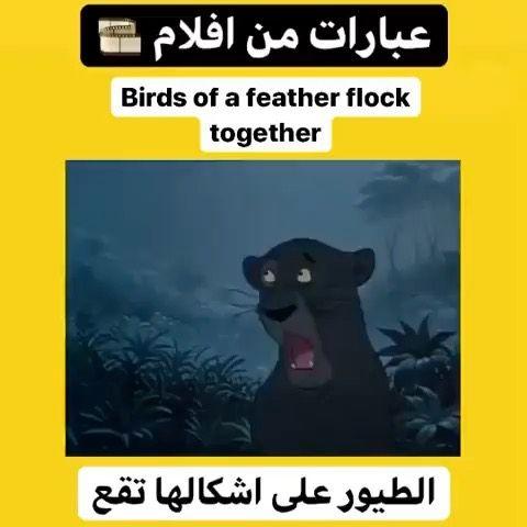 تعلم اللغة الانجليزية S Instagram Video لايك تعليق وشكرا 3nglish L صفحة احمد الغالي دروس ع Bird Feathers Playbill