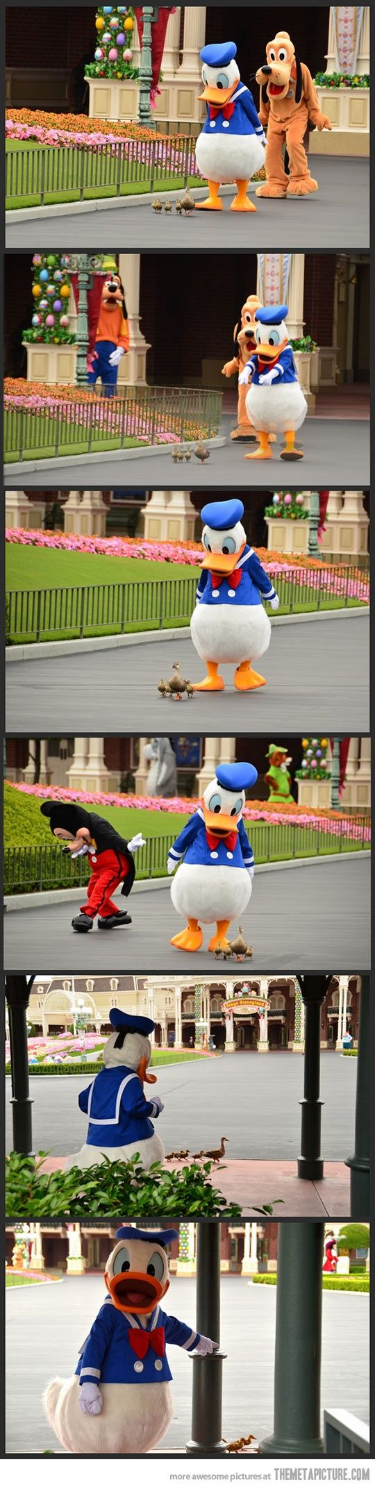 Donald Duck following his long-lost relatives.