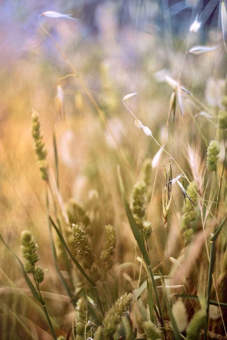 the fragrance of summer grain by Marcello Machelli on 500px