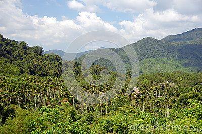 Chinese jungle, island of Hainan, May 2011