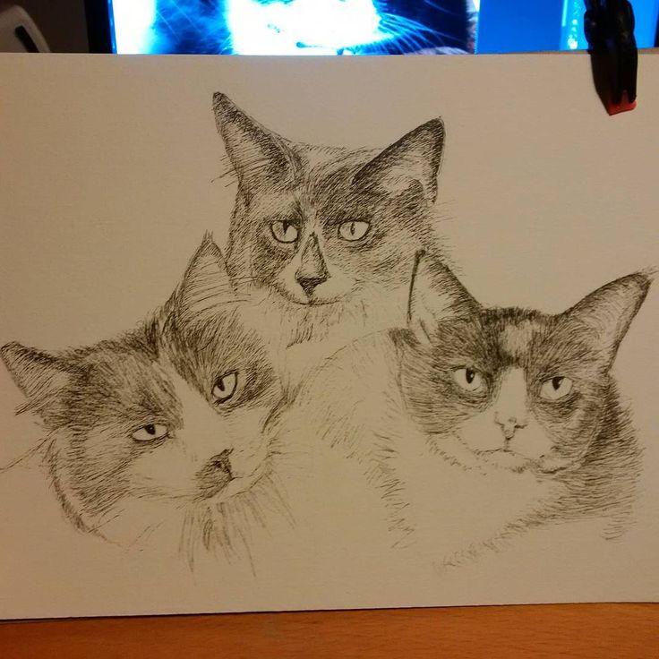Working on a tripple #portrait #commission See nore at http://tclausen.net #drawing #cats #catsofinstagram #catstagram #petstagram #petart #twitter #wip