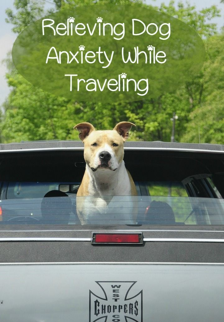 Dog anxiety can be a horrible thing for both your pet and for you. There are a few ways to address dog anxiety that can help make life easier.