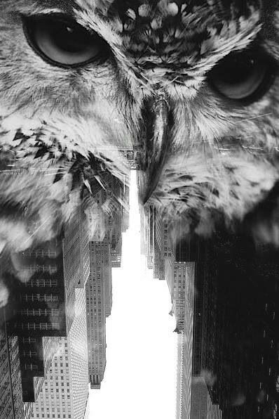 Double Exposure owl