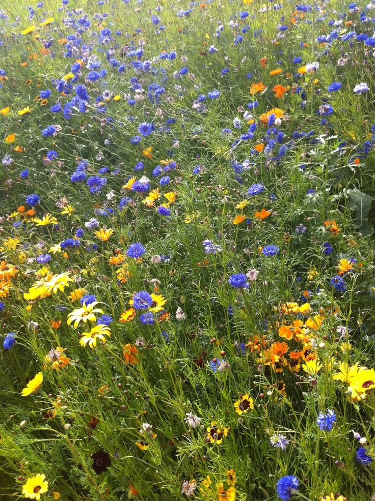 Wild flowers all around the Olympic Park