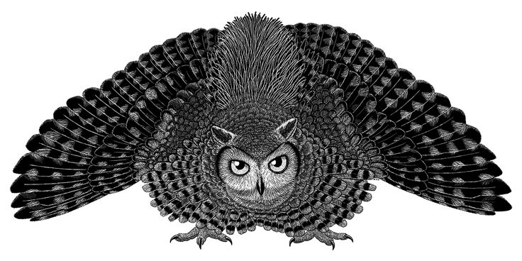 "Palaeoglaux artophoron, a basal owl from the Middle Eocene of Germany, living around 47 million years ago. Although not quite the oldest known fossil owl, it's represented by much more complete remains.About the size of a modern little owl or burrowing owl (~22cm/8.5″ long), it had some unusual plumage on its back – long thin ""ribbon-like"" feathers, membranous and without barbs. Similar feathers are known in some modern birds, but all are used for display purposes. And, since visual di..."