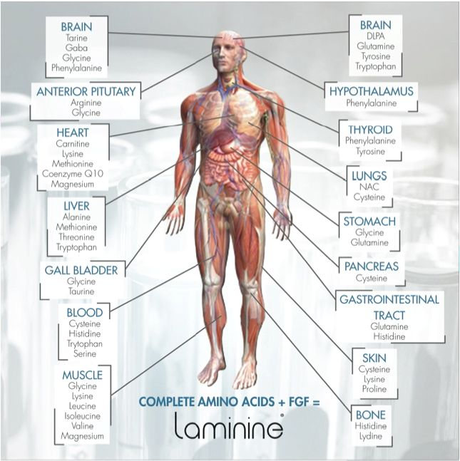 Here is why you need Laminine as every Organ needs amino acids in the body and our food supply today are lacking the tools the body needs to rebuild and rebalance. www.aim4healthyliving.com