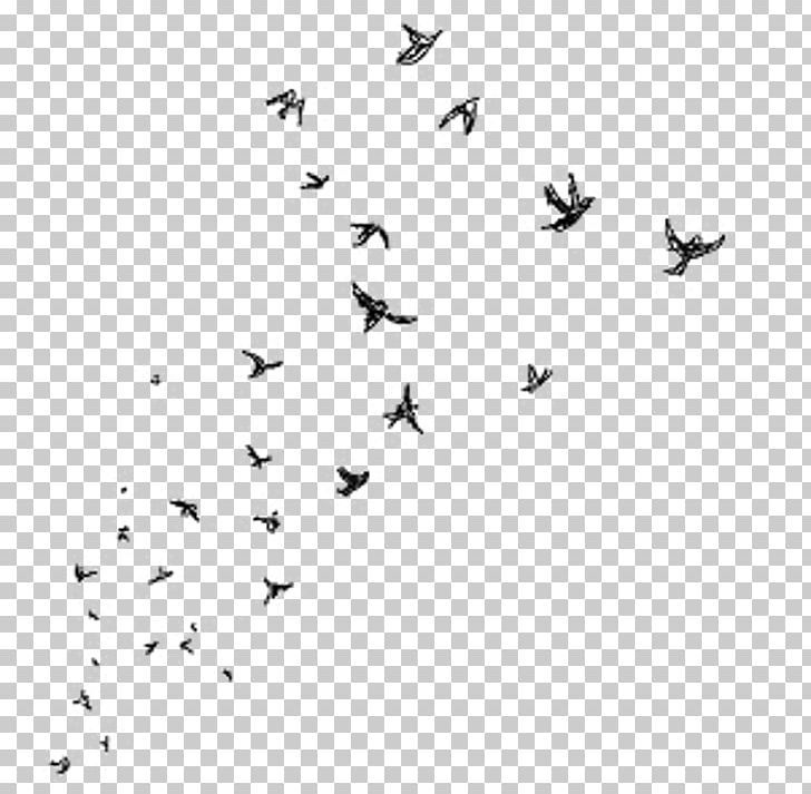 Desktop Picsart Photo Studio Bird Drawing Png Aesthetic Android Animal Migration Animals Beak Overlays Transparent Picsart Overlays Picsart