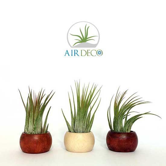 Suporturi lemn cu plante aeriene made by AirDeco