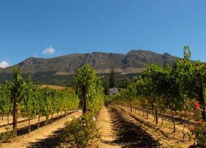 £1689 -- South Africa: Cape Town & Winelands Tour