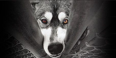 Pet-Abuse.Com is a national animal protection organization that researches and tracks incidents of criminal animal cruelty. We offer a wide range of service and tools for animal advocates, humane law enforcement, researchers and prosecutors.