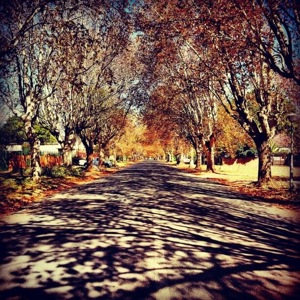 a little Area along the East of Johannesburg #Benoni during Autumn  (Picture taken from my Android phone)