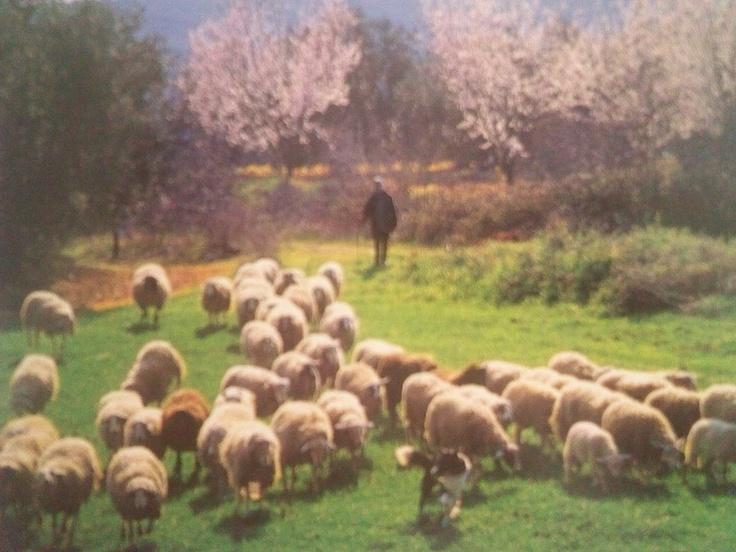 country life at kozani