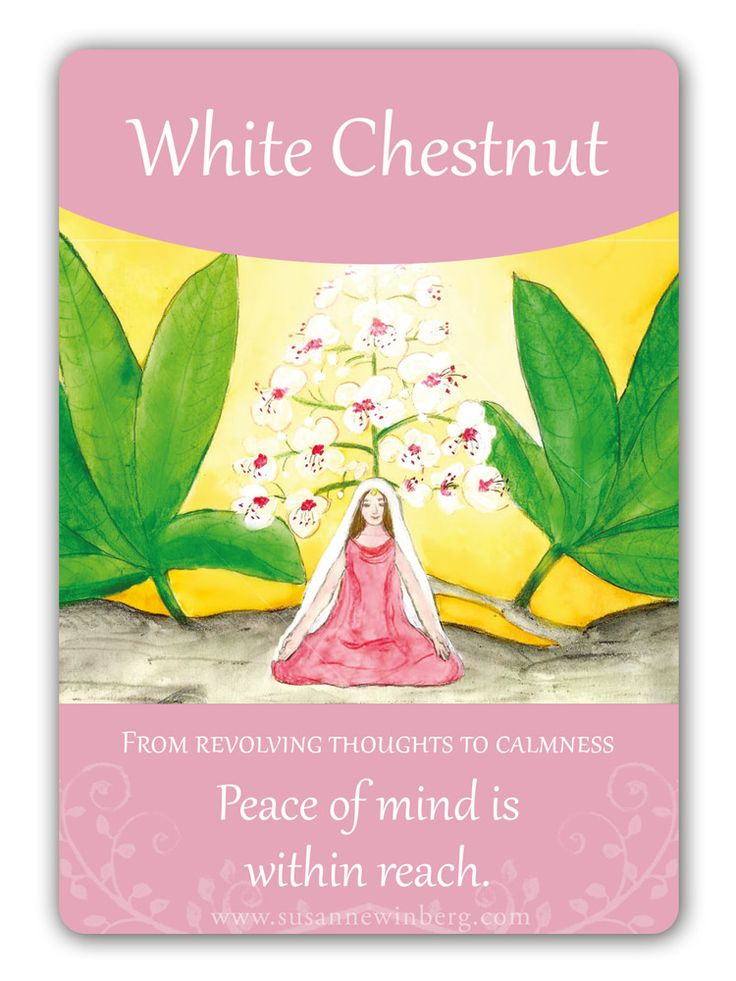 White Chestnut - Bach Flower Oracle Card by Susanne Winberg. Message: Peace of mind is within reach.