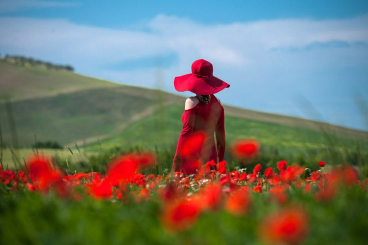 Tuscany, Italy Blooming Poppies, endless field with cypress growing on the edges and great wines!