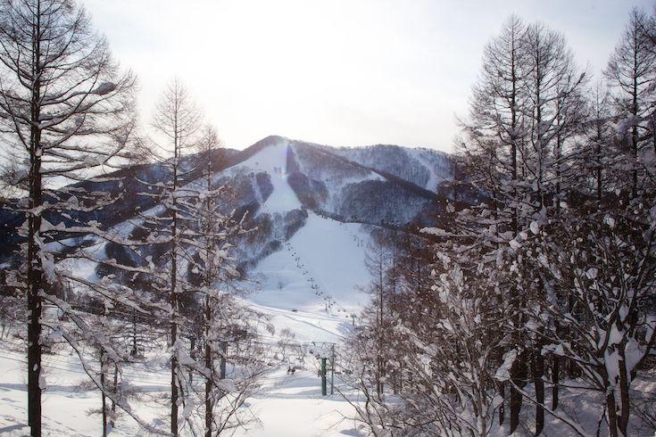 Wonderful winter playground in Madarao Mountain Japan