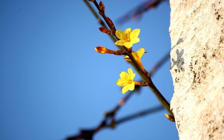 Желтые цветы на ветке Обои для рабочего стола 1920x1200