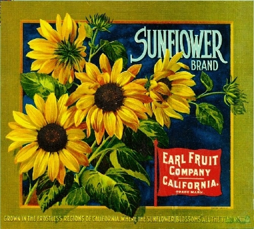 Sunflower Flowers Orange Citrus Fruit Crate Label Print | eBay