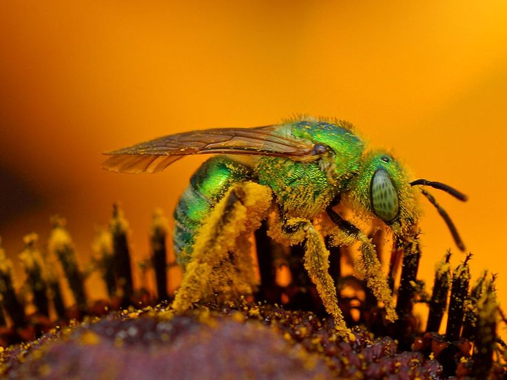 nice How to Get Rid of Sweat Bees - Be Friendly but Persistent  (2017) Check more at https://cozzy.org/how-to-get-rid-of-sweat-bees/