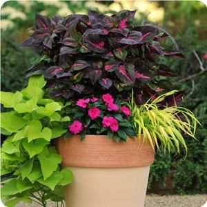 This site is AWESOME. photo gallery of containers with instructions to plant and description of flowers-- for full sun, partial, shade etc.--- One of the best I've seen.