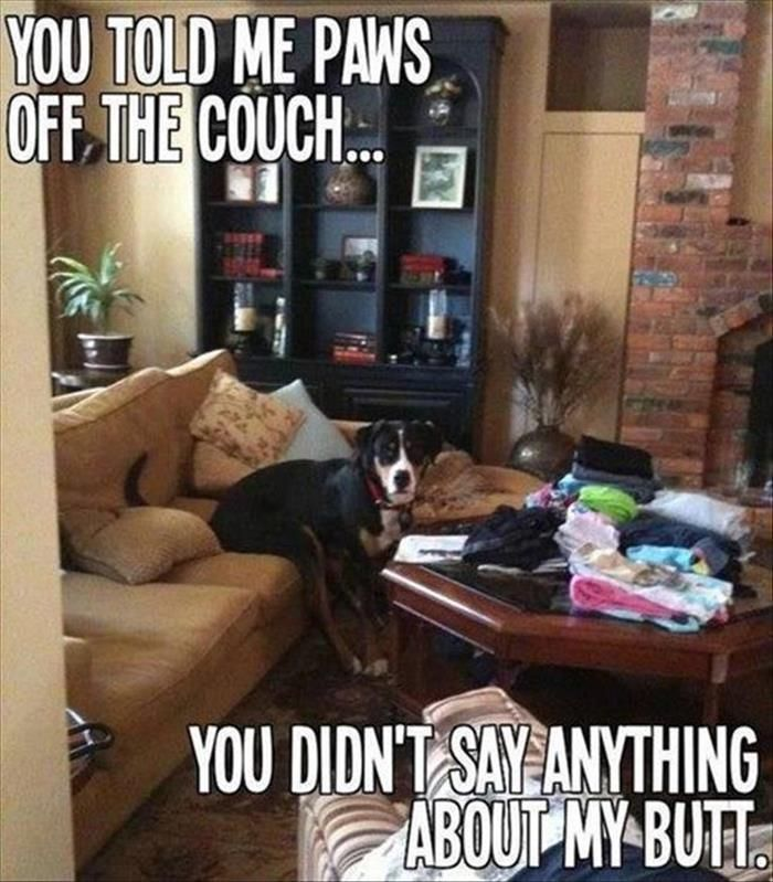 Funny Animals Of The Day – 25 Pics