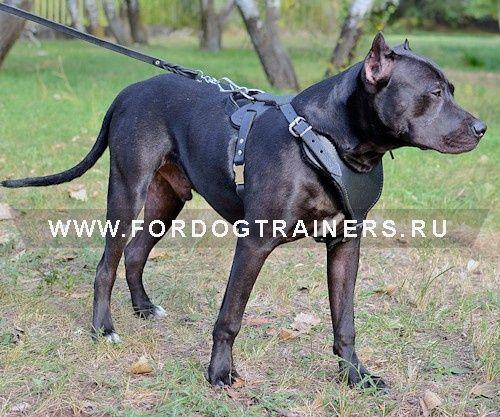 Кожаная шлейка для собаки крупной породы - H8 -> 4554.89 руб.