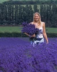woman gathering lavender