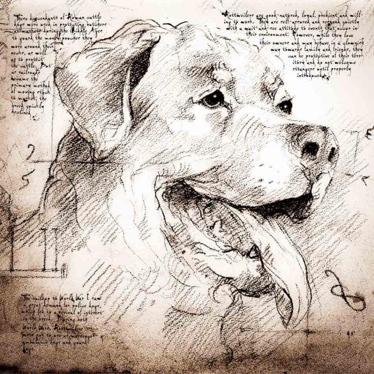 Leonardo da Vinci, dog                                                                                                                                                                                 Más