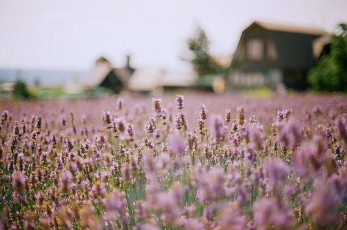 Lavender Farm, Hokkaido  #japan #hokkaido #clicklust #pristine: Lavender Fields, Farms, Camera, Stones Wall Gardens, Places, Vintage Inspiration, Flower, Photography, Vintage Clothing