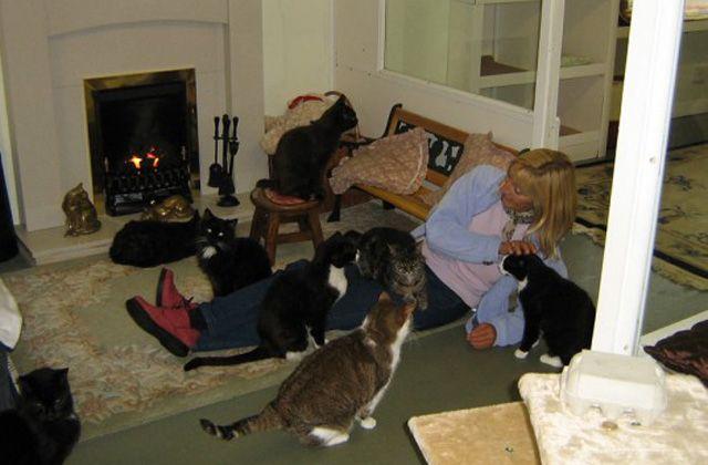 Macskáknak nyitottak öregek otthonát
