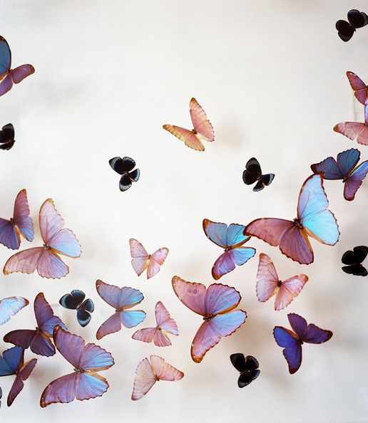 Celerie Kemble Photos, Design, Ideas, Remodel, and Decor - Lonny the Butterfly People