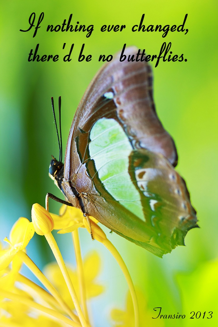 quote about change and butterflies