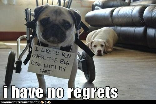 no regrets dogs pinterest