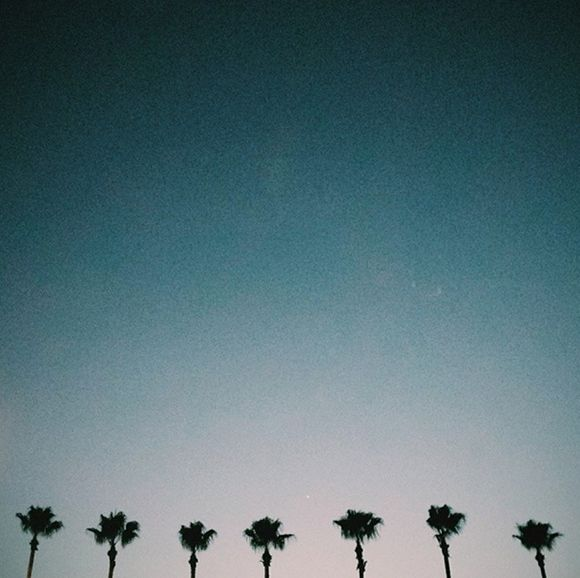 Miami Photo Diary // Palm Trees