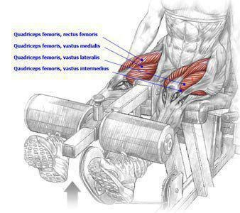Taken from Strength Training Anatomy by Frederic Delavie...thought some of you might find it interesting!