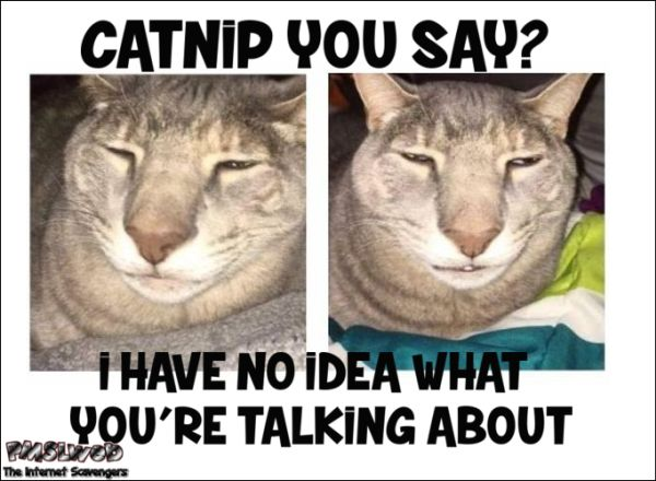Hump Day Toys : Ideas about hump day meme on pinterest happy