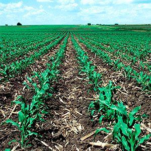 Conservar el suelo cultivable además de necesario es fácil aplicando unas sencillas técnicas como la siembra directa, la rotación de cultivos, la gestión de purines o la aplicación de feromonas en lugar de usar pesticidas. Estas prácticas ahorran gastos de producción y mejoran a largo plazo la productividad del terreno.