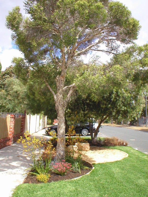 Street verge garden in Perth.  I'd like to do something with the nature strip so it's not just weedy grass.