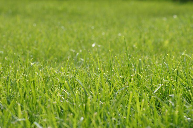 Za taką zieloną trawką tęsknię ;)