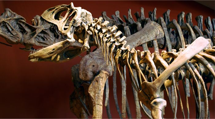 197 Best Images About Dinosauricon A Allosaurus On